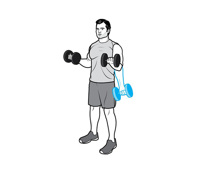 Iso-Hold Biceps Curl (Iso Biceps Bend)