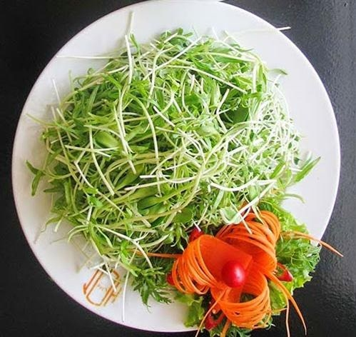 Salad sprouts are extremely easy to lose weight, give you a good shape