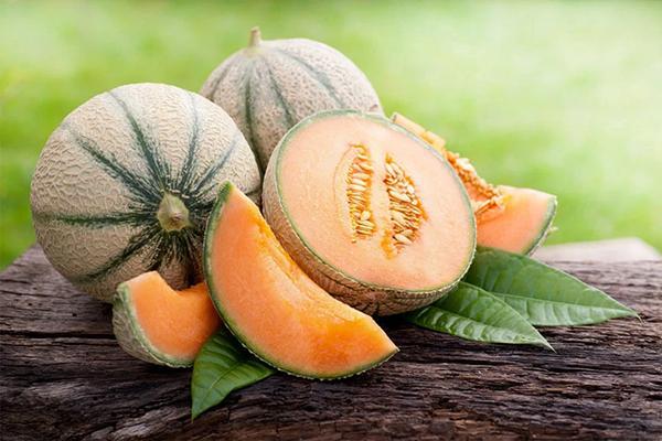 Melon net