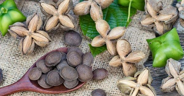 How to eat Sachi seeds?