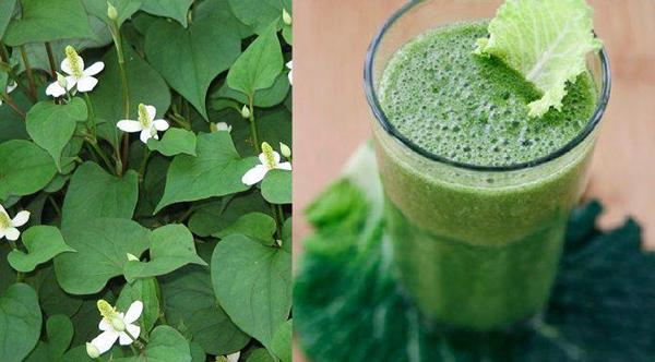 Fish lettuce smoothie: Cool liver, detoxify